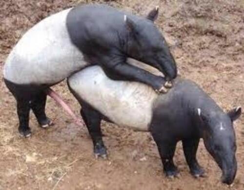 Animal Twitter Porn