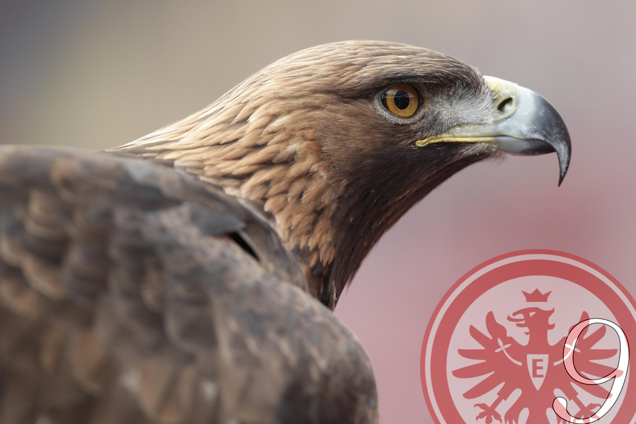 Eintracht Adler Attila