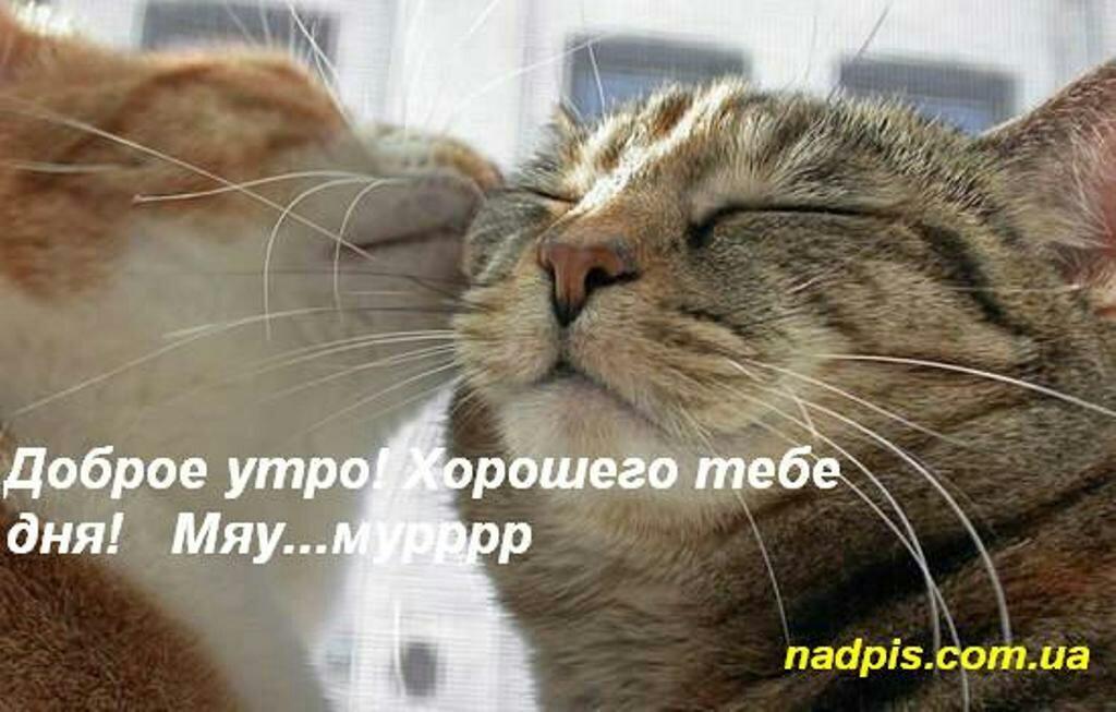Для, с добрым утром котенок картинки с надписями