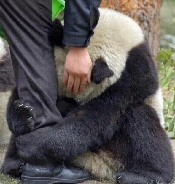 صور مؤثرة للحيوانات BJNG-1ZCMAEfuyy.jpg: