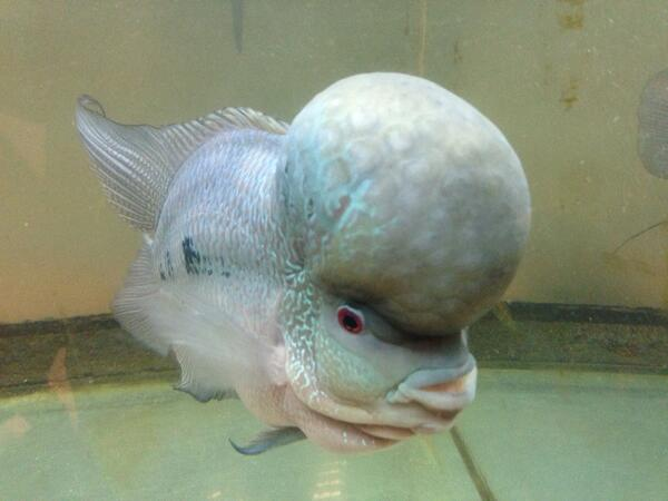 Anupam kher on twitter strange looking fish in the fish for Weird looking fish