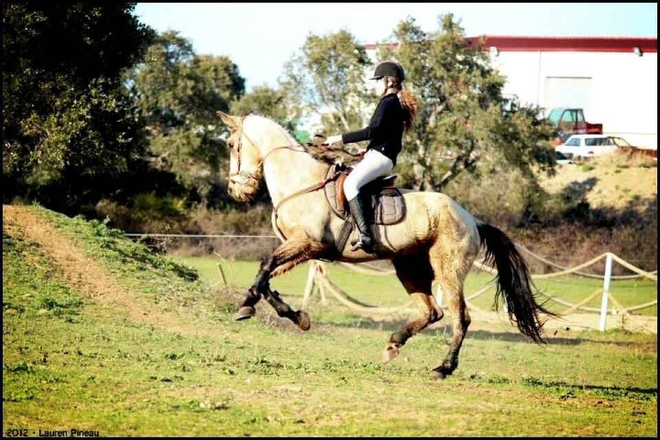 """elsa pianelli on twitter """"e piu bellu cavallu cheval"""