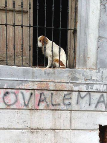 Ma. Concepción Torales: FOTO de Pedro Fadul, exPPQ, en el Facebook. Será una indirecta de cómo quedó Carrizosa después del 21/04/13?