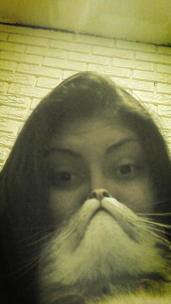 #catbearding #lovehim #howdoilook pic.twitter.com/GUbiZKR4Yp