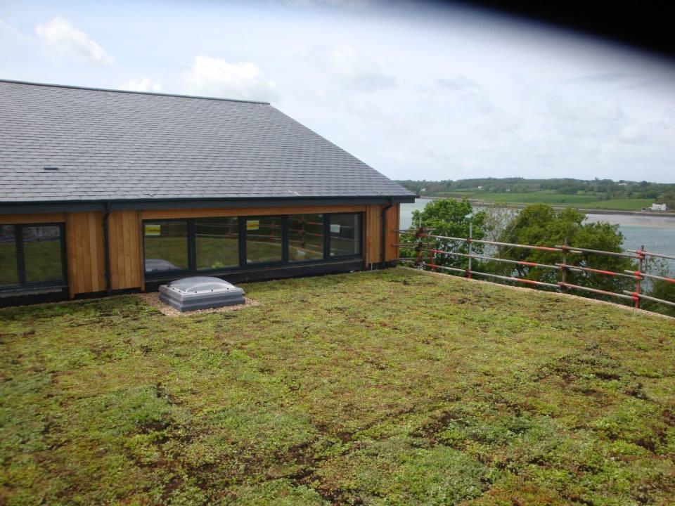 Sedum Roof Sedum Roof at Felinheli