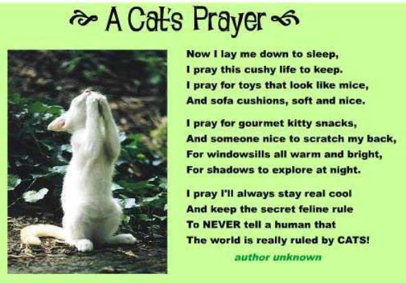 A Cat's Prayer... http://t.co/KaWbqkzAHP