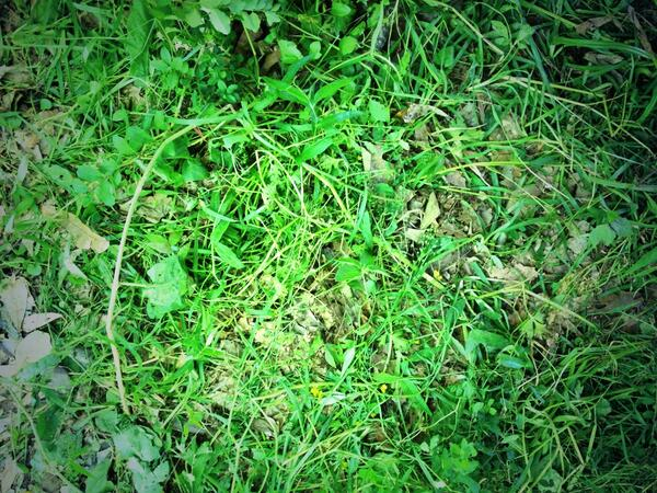 This is what the glade looks like #mazerunner #troll