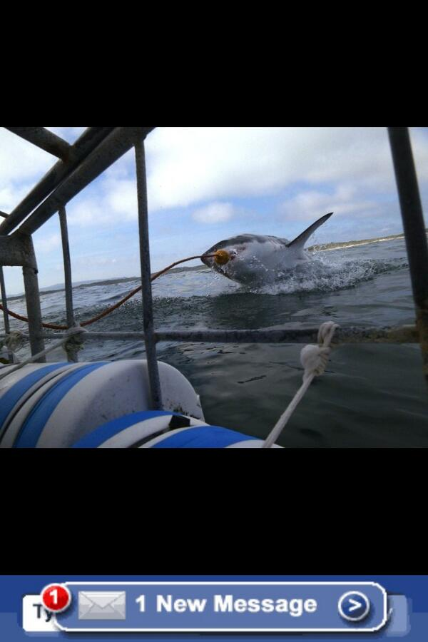 This is number 1 on my bucket list... #CageDivingWithGreatWhites pic.twitter.com/ZqnVY5dCtj