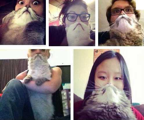 Cat bearding is a thing now. Let's all just give up, shall we? pic.twitter.com/8sQDxAgvdX