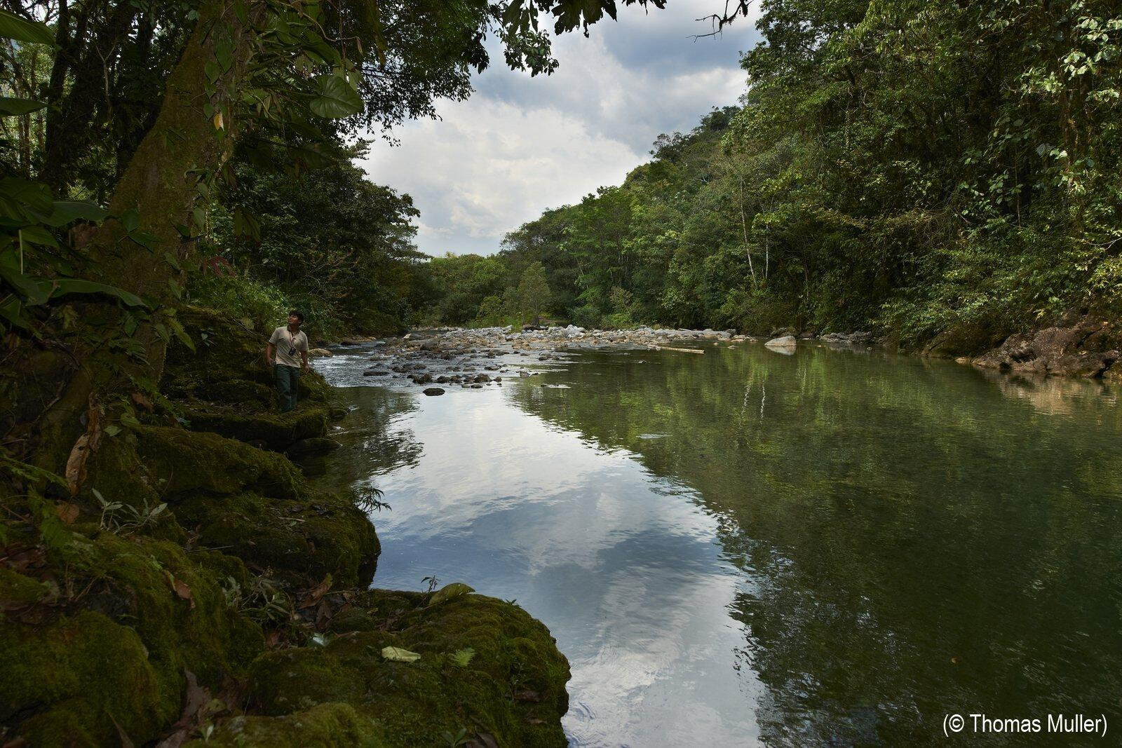 Twitter / ConservationOrg: Forests: nature's water ...