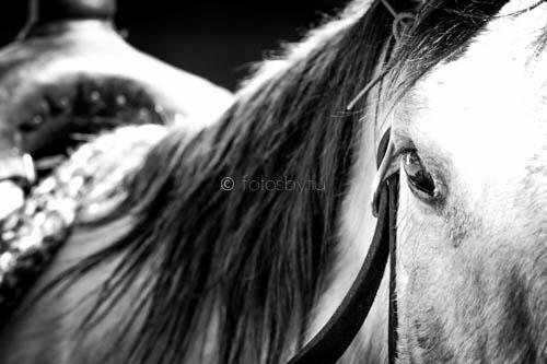Twitter / fotosbytiiu: Eyes of a horse....clear as ...