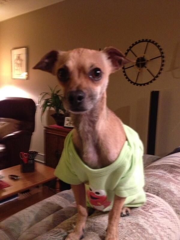 Missing since May 15 but Chihuahua sightings in Marlborough, Temple & Abbeydale! Please RT & help Us find lil' Jack! http://t.co/DQJCn2Pewf