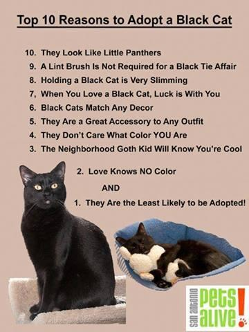 cat quotes and pics on twitter quottop 10 reasons to adopt a