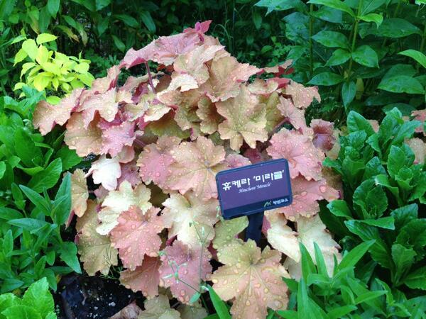 희한한 식물입니다.. 이 녀석도 처음 보네요..^^ RT @befloras: @kingdomlee  같이 어울려 다니지 않으면 마찬가지 같아요!! 지금도 좋아요~~ http://t.co/3LpPJFWELB