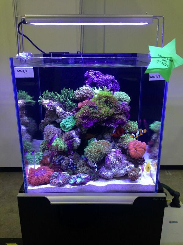 5700 Koleksi Gambar Design Aquascape Nano HD Paling Keren Unduh Gratis