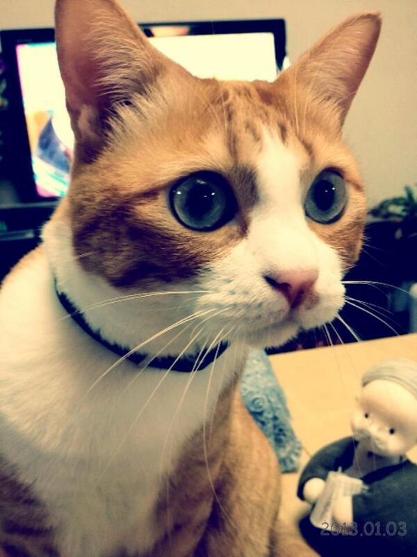 美しい瞳。モフモフの口元。テグスのようなおヒゲ。見つめられたらイチコロです。 pic.twitter.com/8QiSM5fMMj @nyaaakiko