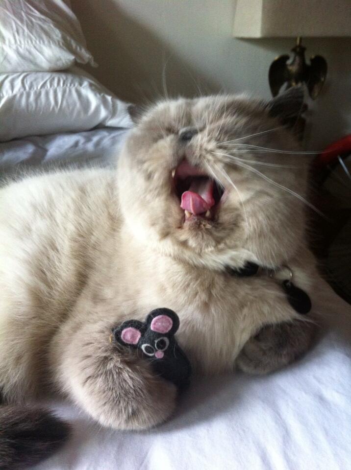 Cute kitties! - Magazine cover
