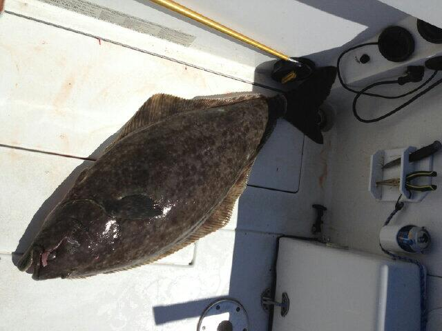 A nice 40lb halibut caught by Oli on Hooked Up at Thrasher while fishing for Springs.