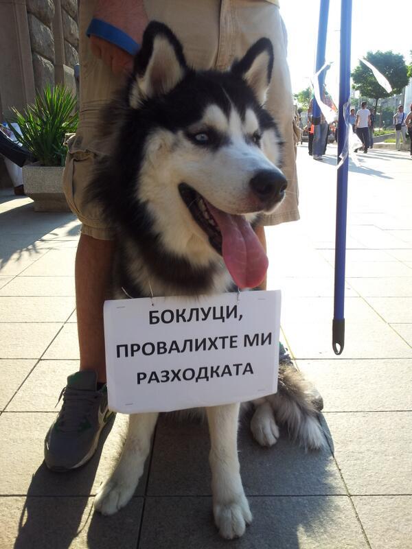 Боклуци, провалихте му разходката #ДАНСwithme pic.twitter.com/dYjK8Jm7cl