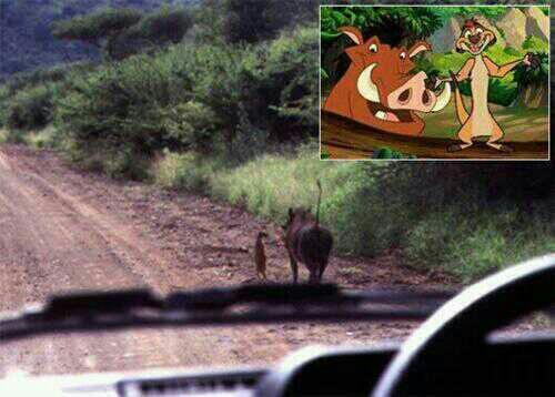 #DisneyRealista ¡Timón y Pumba existen!