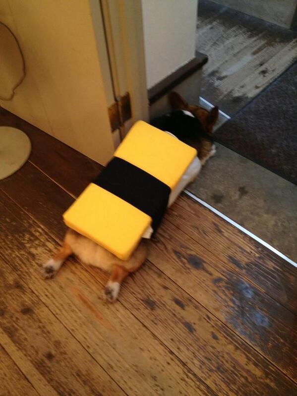 卵寿司っぽいコーギー pic.twitter.com/1nqOeVLsQR ぺったんこw
