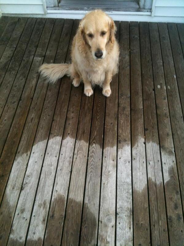 犬「なんかなぁ、うち昼寝しとってん。ほんでな、いきなり雨ふってきてん。」