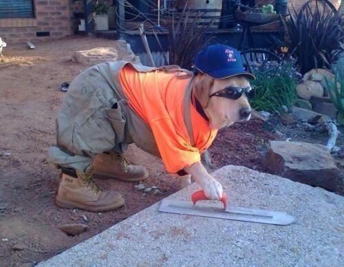 "Mundo Animal on Twitter: """"Dog, el perro constructor"". http://t.co ..."