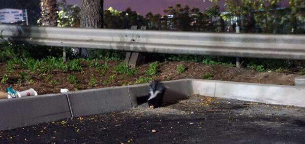 #Dodger Stadium is filled with the smell of a skunk? Is it the skunk I saw during the last homestand, Frank McCourt? http://pic.twitter.com/dv17MeGLdG