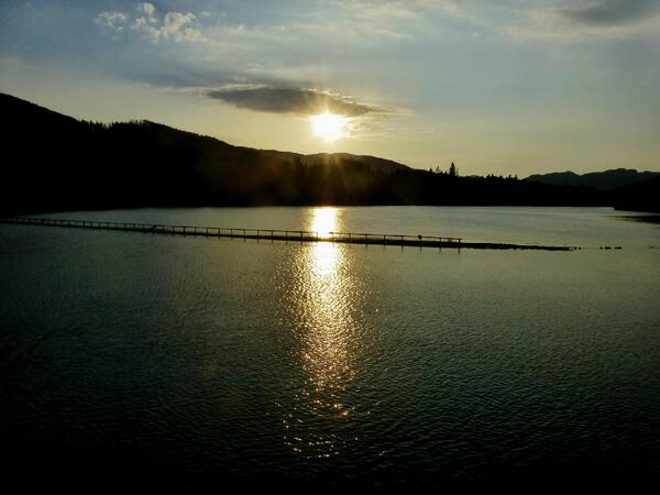 A1 #ScotlandHour Love walking round the Dam at Pitlochry and around Loch Faskally. pic.twitter.com/CcPnVGnv6b
