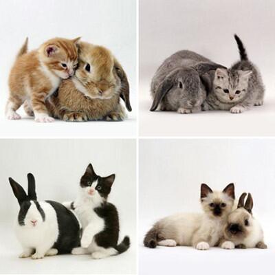同じ柄のネコとウサギ