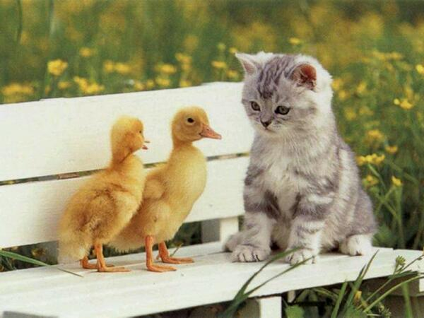 Unduh 92+  Gambar Kucing Lucu Pacaran Paling Baru