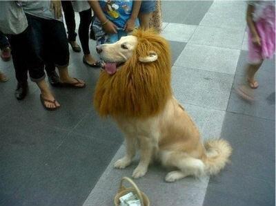 百獣の王です pic.twitter.com/Y6BhvdhSmC えらく人懐っこい百獣の王だなw