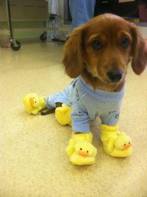 新しい パジャマ だ よ pic twitter ...