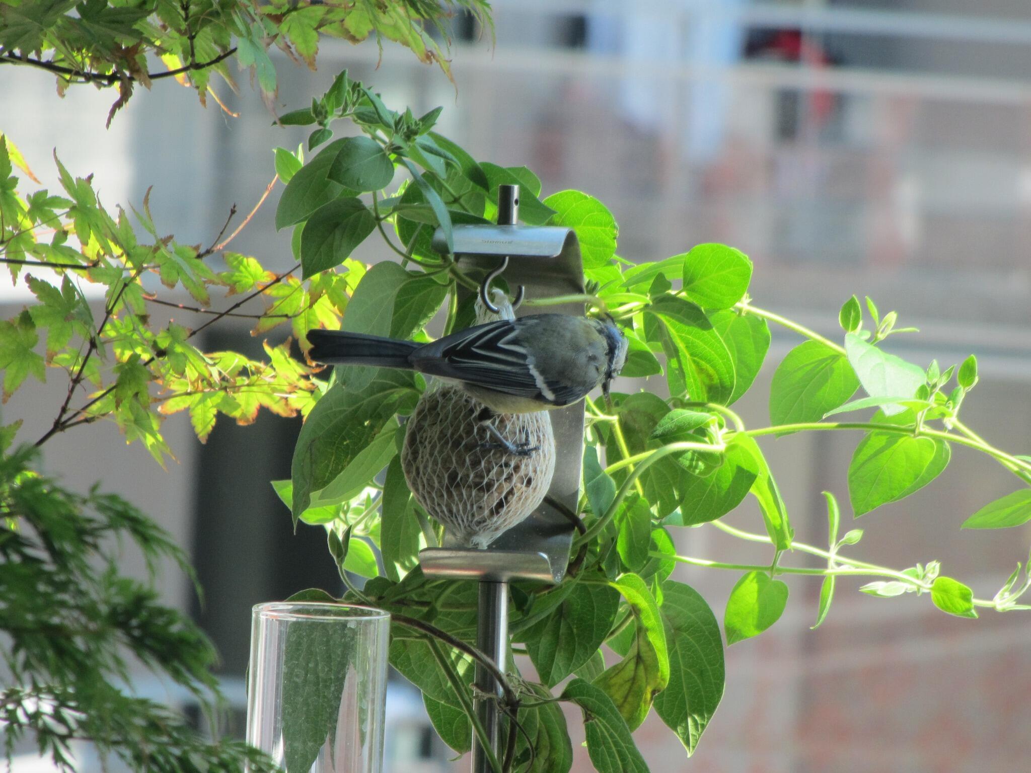 Ornithologie BOlv5YHCAAITRJ6
