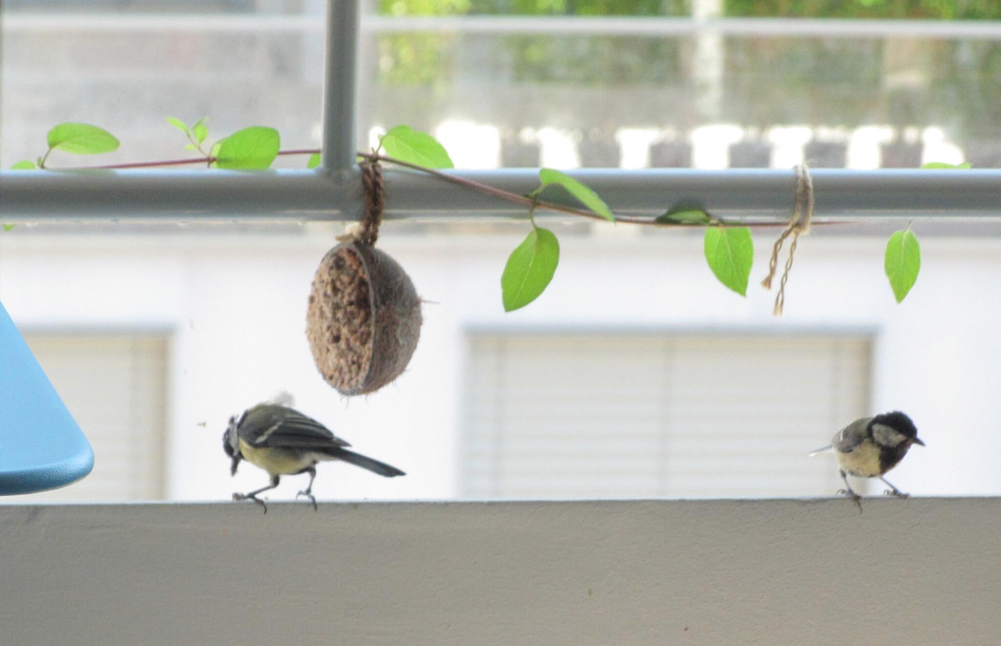 Ornithologie BOlvs3QCAAA84AM