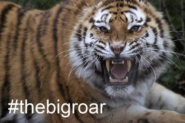 Thumbnail for #TheBigRoar: a conversation on conservation