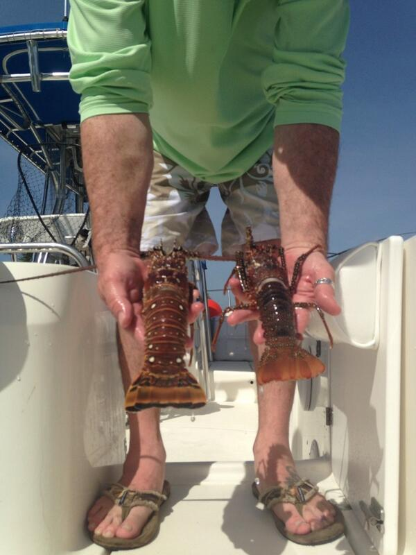 Spiny lobster v. Spanish lobster. Learning all about saltwater fishing.  #tclobster pic.twitter.com/sAINxZ977H