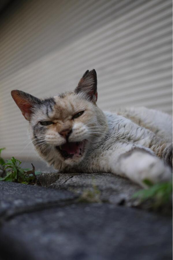 @maloreno2  主にこんな顔をして怒っておられました。 http://t.co/iqZdGoevCo