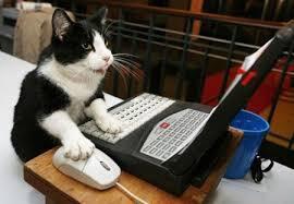 Download 67+  Gambar Kucing Gokil Paling Keren Gratis