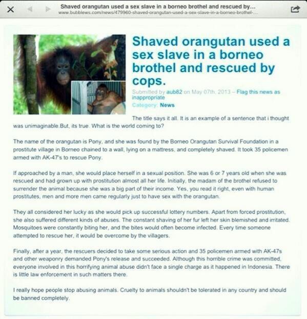 Shaved sex orangutan