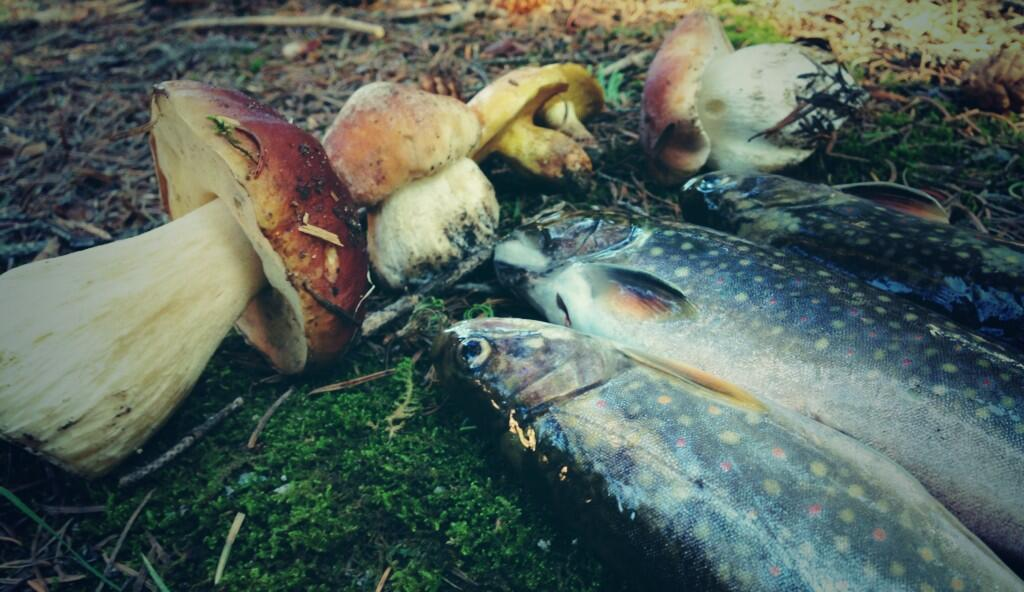 Tenkara fly fishing with mushrooms and trout
