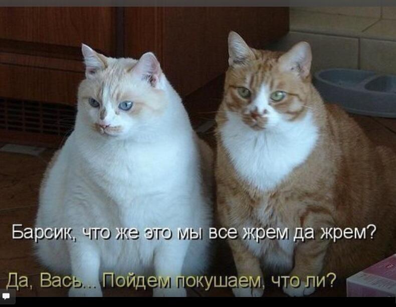 Смешные картинки котов и кошек с надписями смех