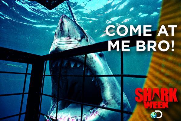 shark account