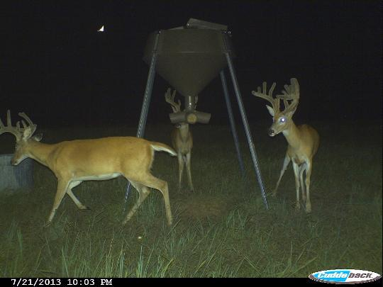 blog post deer for and feeders blinds sale boss feeder buck