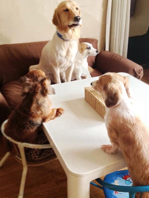 【番外編】犬会議…議題は?