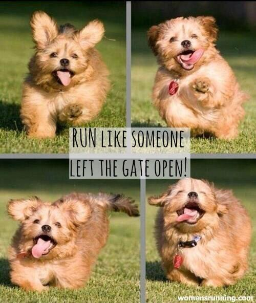 women s running on twitter run like someone left the gate open