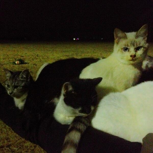 #フォロワーが体験した事が無さそうな体験 冬の夜、公園の芝生で寝ていたら、10匹の猫が身体の上で暖を取りだした。 pic.twitter.com/XIZUPgblH9