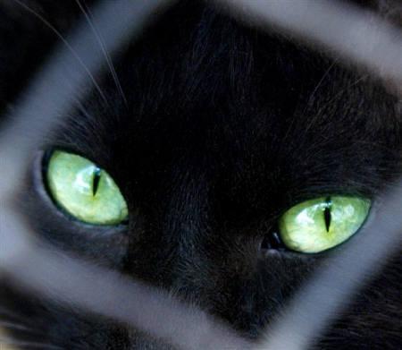 この黒猫が好きな人はRT #黒猫 #Blackcat  pic.twitter.com/JwjQcHuwUC