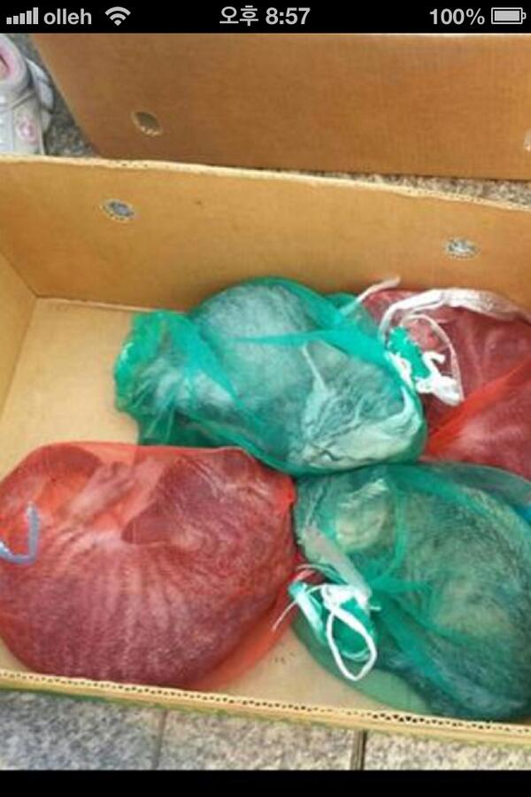 부산 남포동에서 고양이를 양파망에 넣어서 팔고있는 미친아줌마가 있답니다.보이는대로 신고해주세요. http://t.co/UnOrmlrTVg