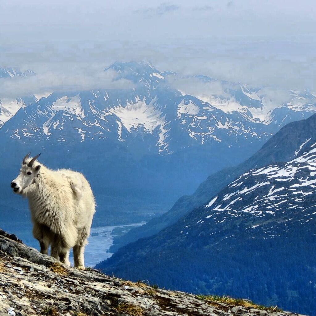 Harding Icefield Trail @KenaiFjordsNPS. #alaska pic.twitter.com/yozsSLnrcD